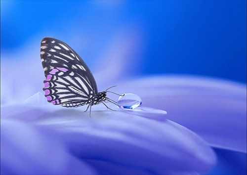 Butterfly Blue Flower, Black colour - From £17.50 | Metal Plate Pictures