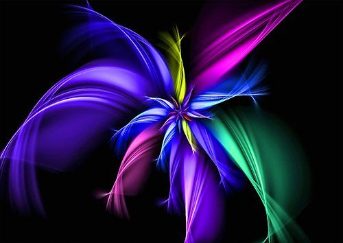 Fractal colours flower, Black colour - From £17.50 | Metal Plate Pictures