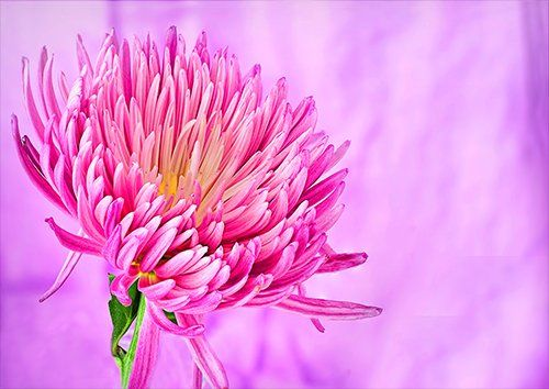 Nature blur art pink flower, Black colour - From £17.50 | Metal Plate Pictures
