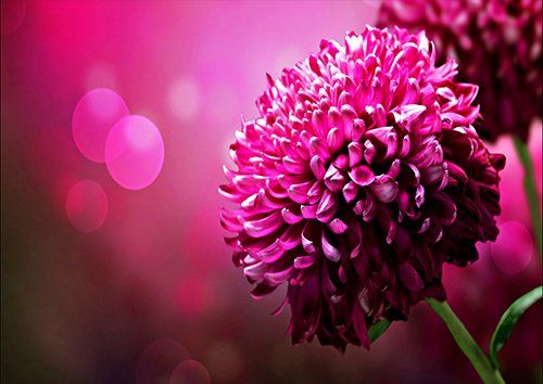 Purple blossom bloom flower, Black colour - From £17.50 | Metal Plate Pictures