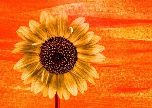 Sun flower, Black colour - From £17.50 | Metal Plate Pictures