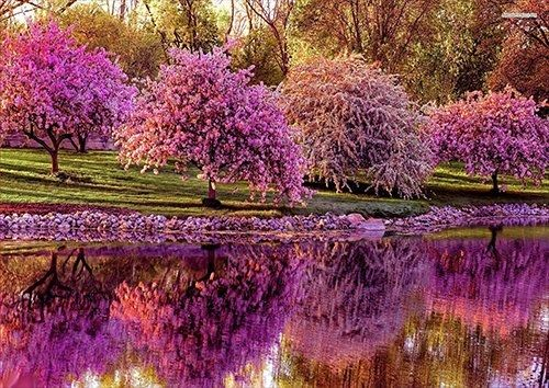Blossomed spring trees along the river, Black colour - From £17.50 | Metal Plate Pictures