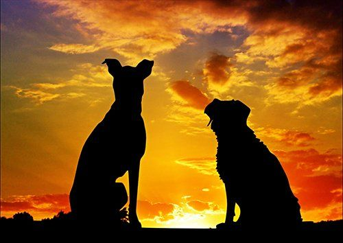 Dogs setting sun silhouette, Black colour - From £17.50 | Metal Plate Pictures