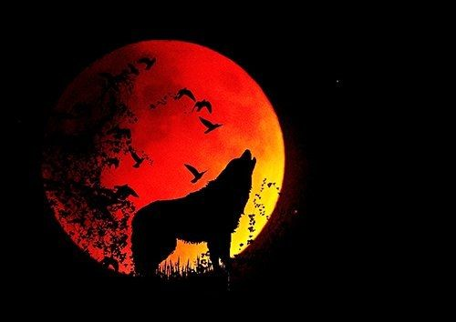 Full moon howl wolf silhouette, Black colour - From £17.50 | Metal Plate Pictures