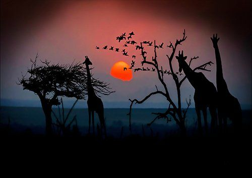Giraffes africa trees silhouette, Black colour - From £17.50 | Metal Plate Pictures