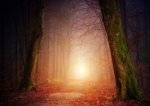 Nature Wood Tree Light Sun Fog Foggy Forest, Black colour - From £20.50 | Metal Plate Pictures
