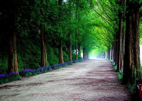 Path woods trees landscape, Black colour - From £17.50 | Metal Plate Pictures