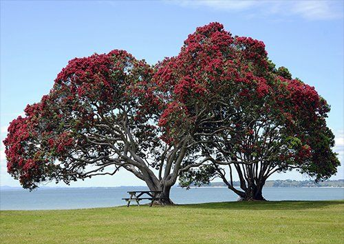 Pohutukawa trees, Black colour - From £17.50 | Metal Plate Pictures