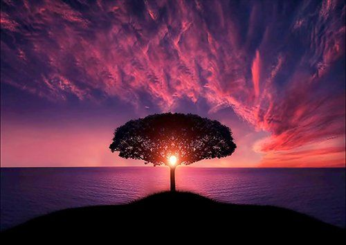 Purple sunset tree silhouette, Black colour - From £17.50 | Metal Plate Pictures