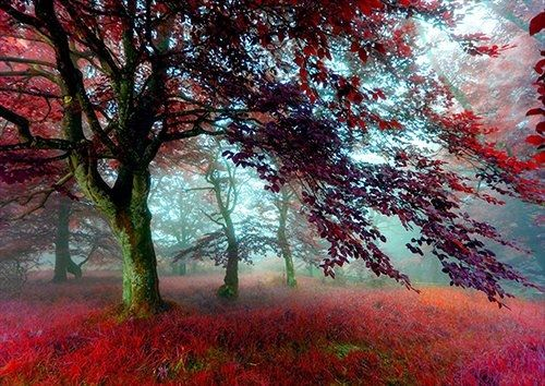 Red effect autumn forest wide, Black colour - From £17.50 | Metal Plate Pictures