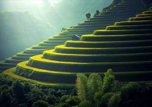 Rice plantation landscape, Black colour - From £17.50   Metal Plate Pictures