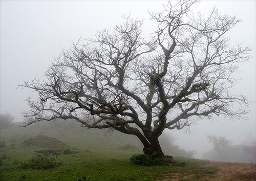 Trees in the fog india, Black colour - From £20.50 | Metal Plate Pictures