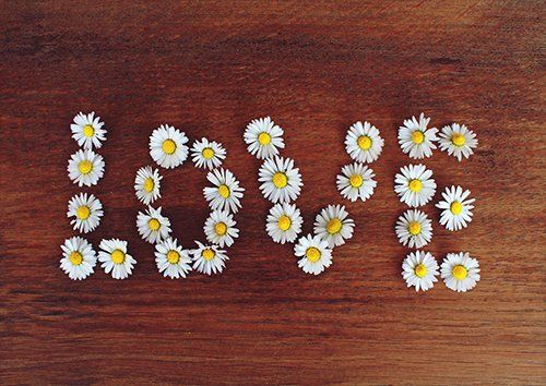 Daisy flower love, Black colour - From £17.50 | Metal Plate Pictures