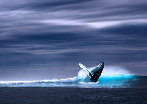 Ocean whale sky sea, Black colour - From £20.50 | Metal Plate Pictures