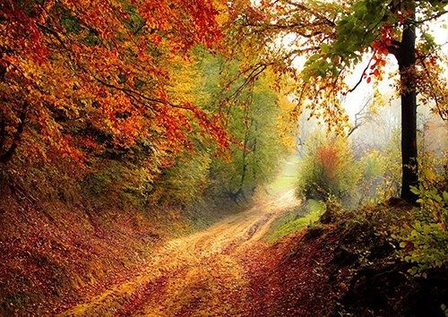 Autum leaves road trees, Black colour - From £17.50 | Metal Plate Pictures