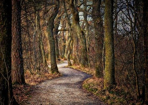 Forest footpath trees, Black colour - From £17.50 | Metal Plate Pictures