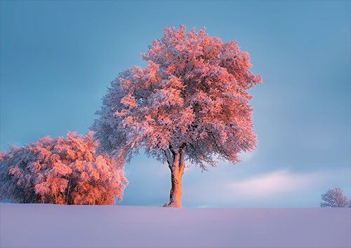 Winter Snow Frost Hoarfrost trees, Black colour - From £17.50 | Metal Plate Pictures