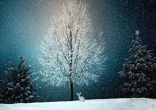 Winter Wintry Snow  trees, Black colour - From £17.50 | Metal Plate Pictures