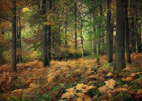 Woodland Forest Autumn Nature Landscape Trees, Black colour - From £17.50 | Metal Plate Pictures